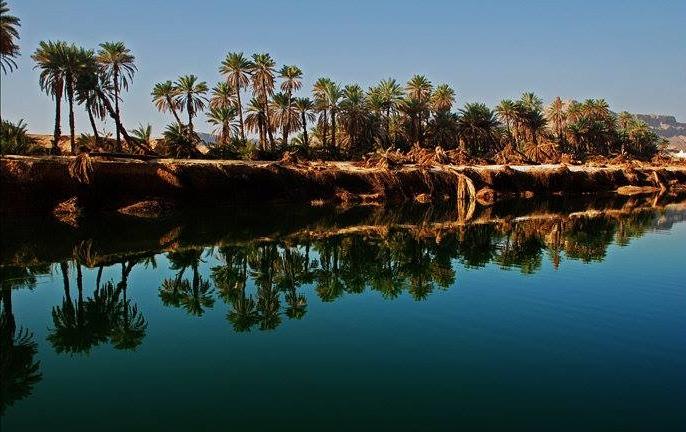 palms oasis
